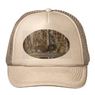 Squirrel on Deck Rail 2 Trucker Hat