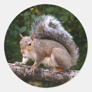 Squirrel On Limb Round Sticker