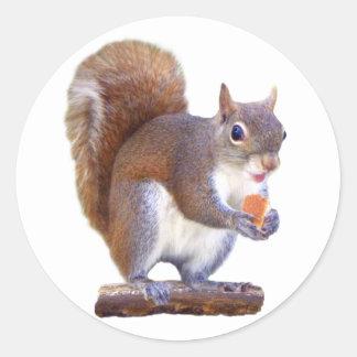 Squirrel on Log Classic Round Sticker