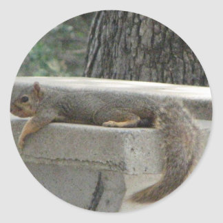 Squirrel on picnic table round sticker