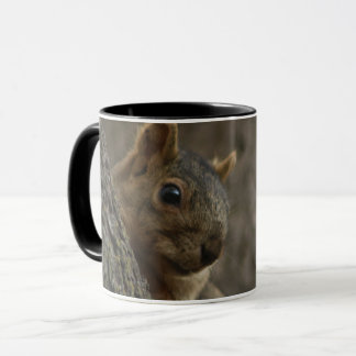 squirrel on the tree looking mug