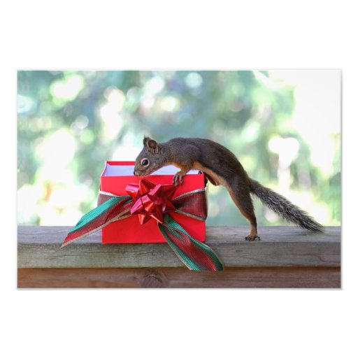Squirrel Opening Christmas Present Photo Art
