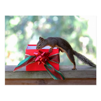 Squirrel Opening Christmas Present Postcard