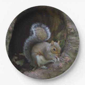 Squirrel Paper Plates
