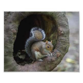 Squirrel Photo Print