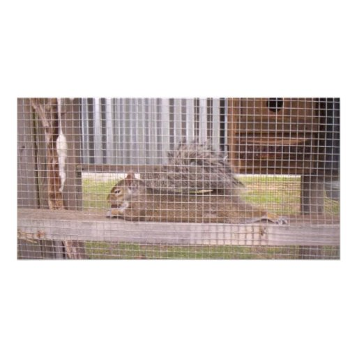 squirrel photo greeting card