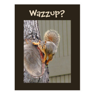 Squirrel Photograph Post Cards