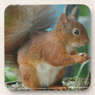 SQUIRREL Photography Jean Louis Glineur Coaster