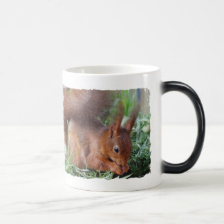 SQUIRREL Photography Jean Louis Glineur Magic Mug