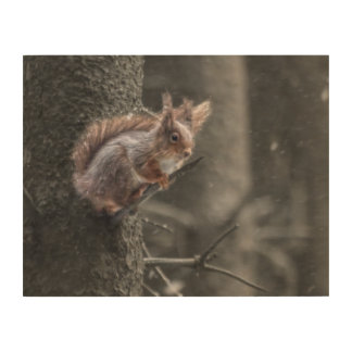 squirrel picture wood wall decor