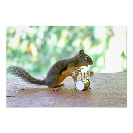 Squirrel Playing Drums Art Photo