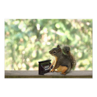 Squirrel Playing Piano Photo