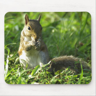 Squirrel Portrait Mouse Pad