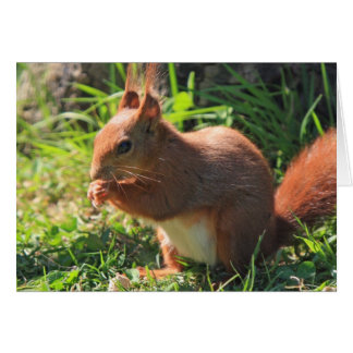 Squirrel red beautiful photo blank greeting card