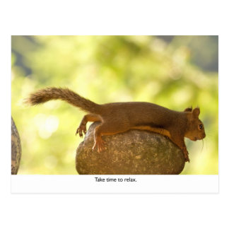 Squirrel Relaxing Post Cards
