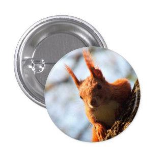 Squirrel Rodent Mammal 1 Inch Round Button