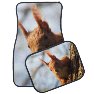 Squirrel Rodent Mammal Auto Mat