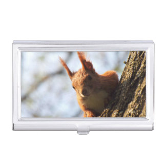 Squirrel Rodent Mammal Business Card Cases