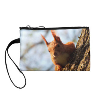 Squirrel Rodent Mammal Coin Purses