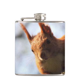 Squirrel Rodent Mammal Flasks