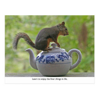Squirrel Sitting on a Teapot Post Cards