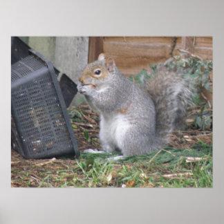 Squirrel Snack Basket Poster