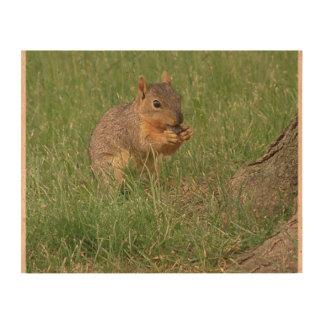 Squirrel Snacking Queork Photo Prints