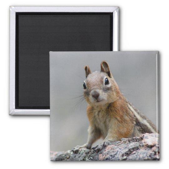 squirrel square magnet