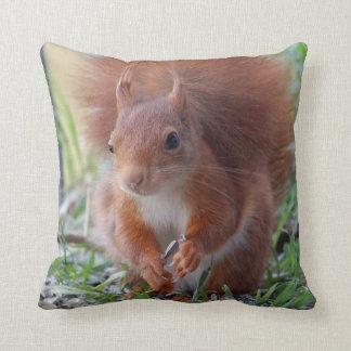 Squirrel squirrel Écureuil cushion