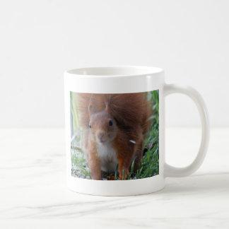 Squirrel squirrel Écureuil - Jean Louis Glineu Coffee Mug