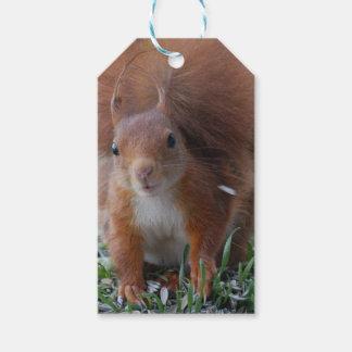 Squirrel squirrel Écureuil - Jean Louis Glineu Gift Tags