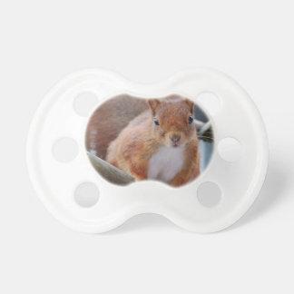 Squirrel squirrel Écureuil - Jean Louis Glineu Pacifier