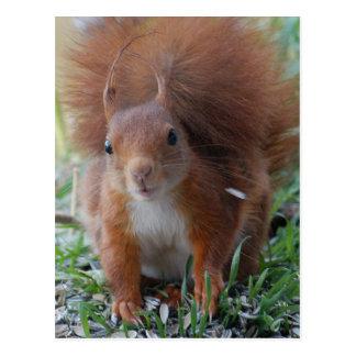 Squirrel squirrel Écureuil - Jean Louis Glineu Postcard