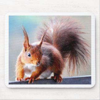 Squirrel squirrel Écureuil Mouse Pad