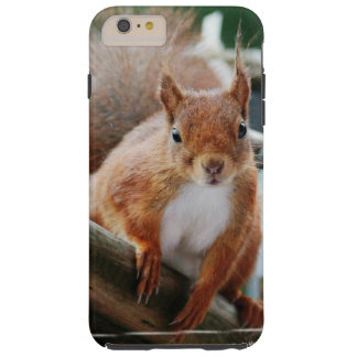 Squirrel Squirrel Écureuil Tough iPhone 6 Plus Case