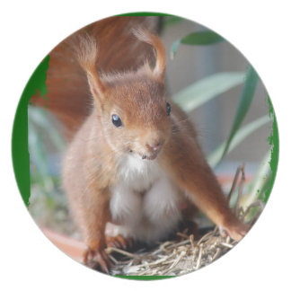 SQUIRREL - SQUIRREL - photo Jean Louis Glineur Dinner Plate