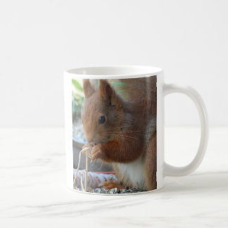 Squirrel ~ squirrels ~ Écureuil - of GLINEUR Coffee Mug
