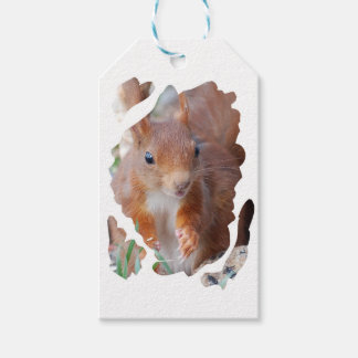 SQUIRREL SQUIRRELS ÉCUREUIL PACK OF GIFT TAGS