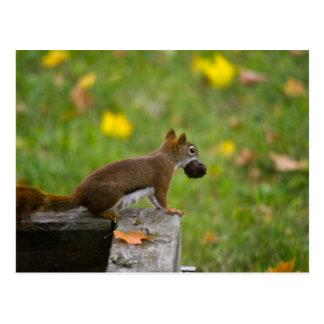 Squirrel thief/squirrel thief postcard