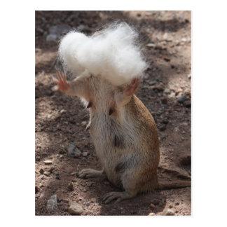 Squirrel vs. Samoyed Fur Postcard