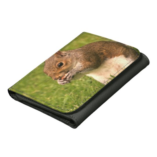 Squirrel Wallet