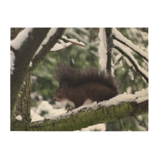 Squirrel Winter Photography  Wood Wall Art