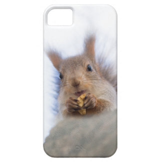 Squirrel with a walnut iPhone 5 cover