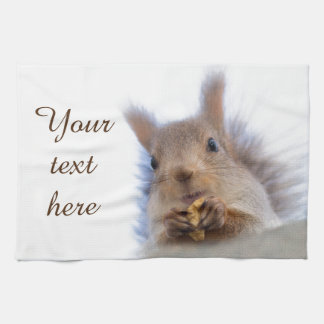 Squirrel with a walnut kitchen towel