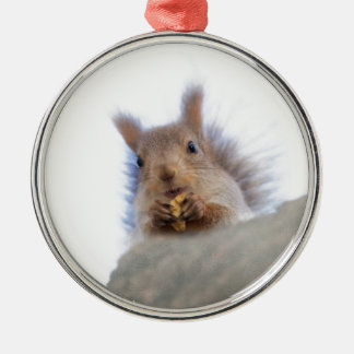 Squirrel with a walnut Silver-Colored round ornament