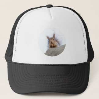 Squirrel with a walnut trucker hat