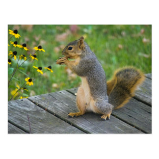 Squirrel with cookie/Squirrel with cookie Postcard