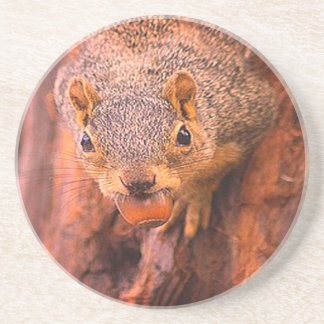 Squirrel with nut Coaster