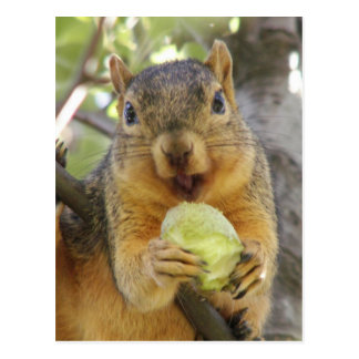 Squirrel with pear postcard