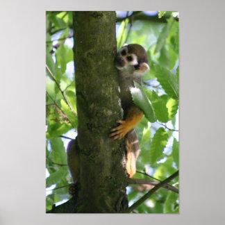 Squirrelmonkey poster